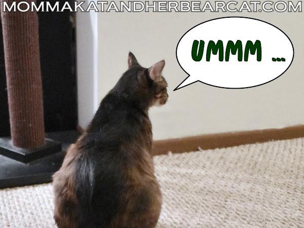 The cat bed caper