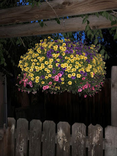 Colorful flowers in hanging basket on patio