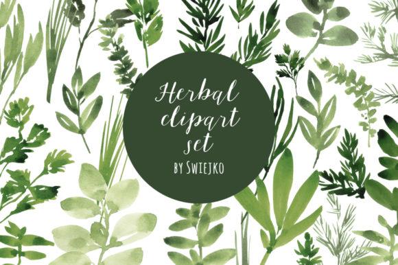 Watercolor Herbs Graphics