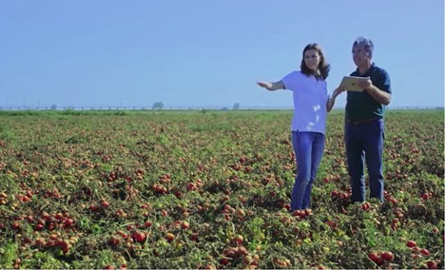 NEC e Kagome fornecem serviços de IA para melhorar produção de tomate