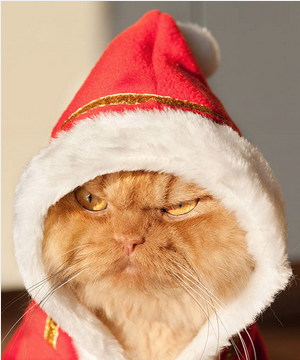 Angry Santa Cat Picture