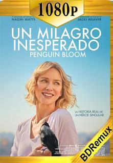 Un milagro inesperado (2020)[1080p Remux] [Latino-Inglés] [Google Drive] chapelHD
