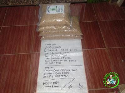 Benih Padi Pesanan    SUDIRMAN Lampung Timur, Lampung.    Benih Sebelum di Packing.