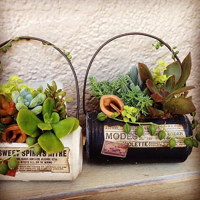 Plantinhas suculentas