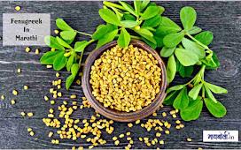 benefits of fenugreek in marathi - फेनुग्रीक चे आरोग्यदायी फायदे