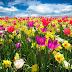 La primavera besaba Antonio Machado poema