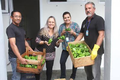 Horta municipal educacional comemora primeira colheita de pimentões com técnicas orgânicas de controle de pragas  e fungos