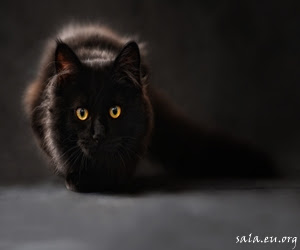 Why Black Cats Become Symbols of Horror And Magic
