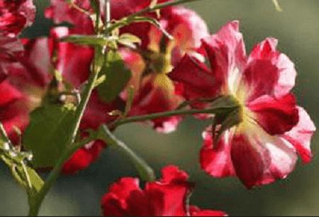 Kumpulan puisi rindu yang roman dan tentang kebahagian rasa rindu