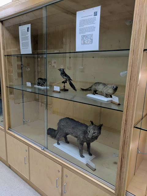 Things to see in Galway: Darwin specimens at the NUI Galway Zoology and Marine Biology Museum