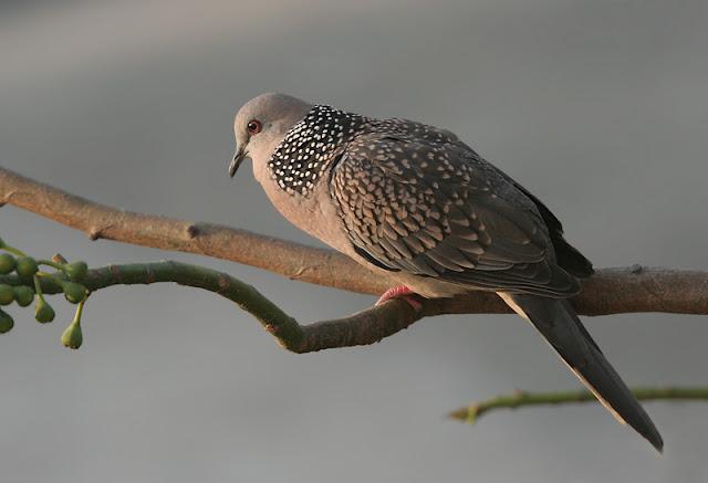 Alone Dove