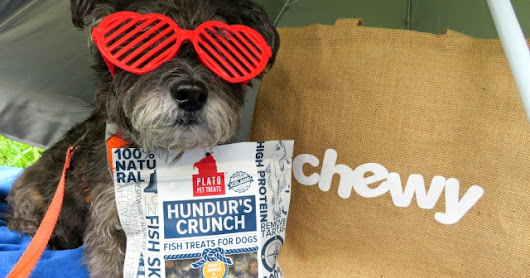 Life's a Beach with Hundur's Crunch #ChewyInfluencer