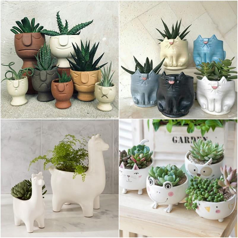 Vasinhos decorativos para suculentas