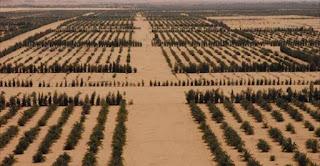 المحاصيل الزراعية التي تتميز بها ليبيا