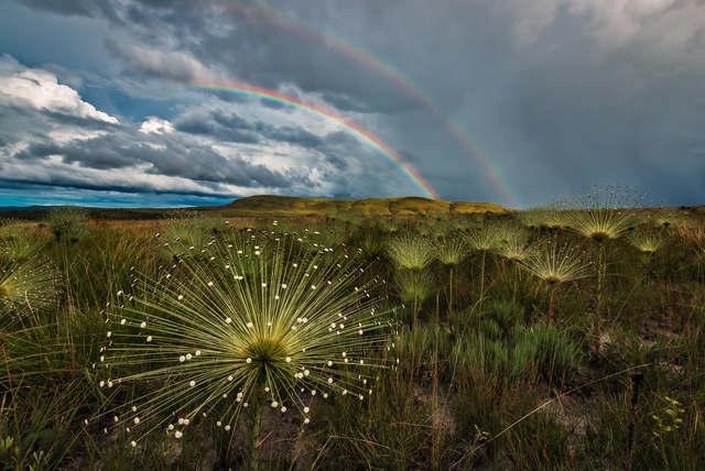 Relatório de Conservação 2019 da TNC - The Nature Conservancy Brasil