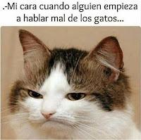 hablar mal de los gatos humor