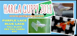 Harga Ikan, Harga GUppy, Harga Ikan Guppy, GUppy Terbaru,