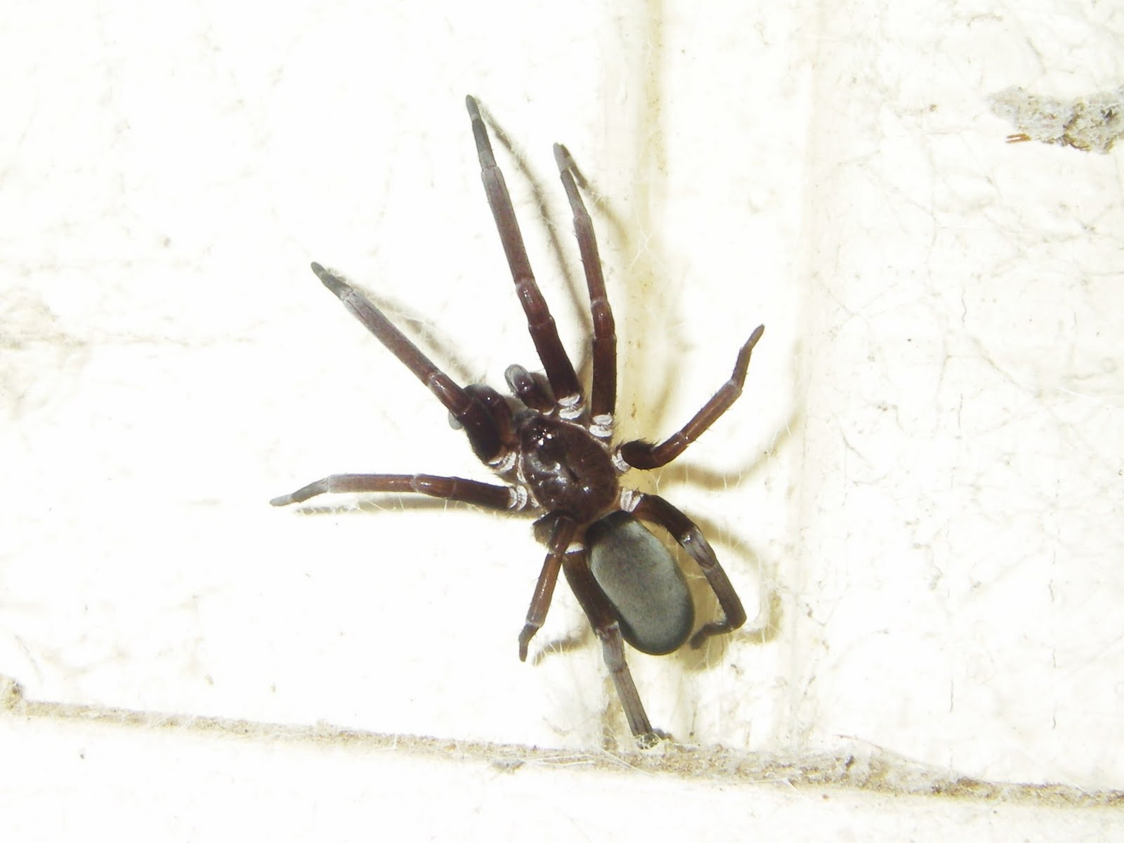 Ecographica: Fuzzy pictures of fuzzy spiders
