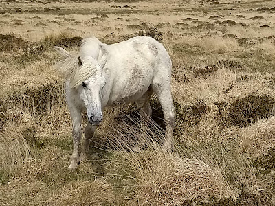 Ed Hill Metal Art - dartmoor ponie