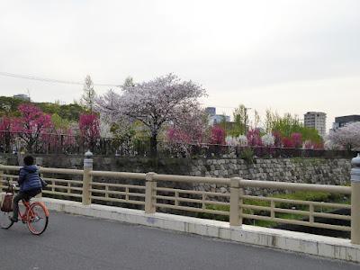 新鴫野橋と大阪城桃園(Peach Grove)