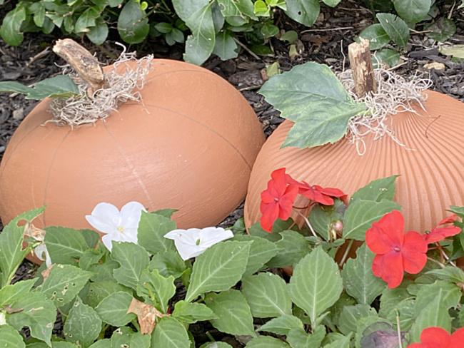 pumpkins in garden with flowers
