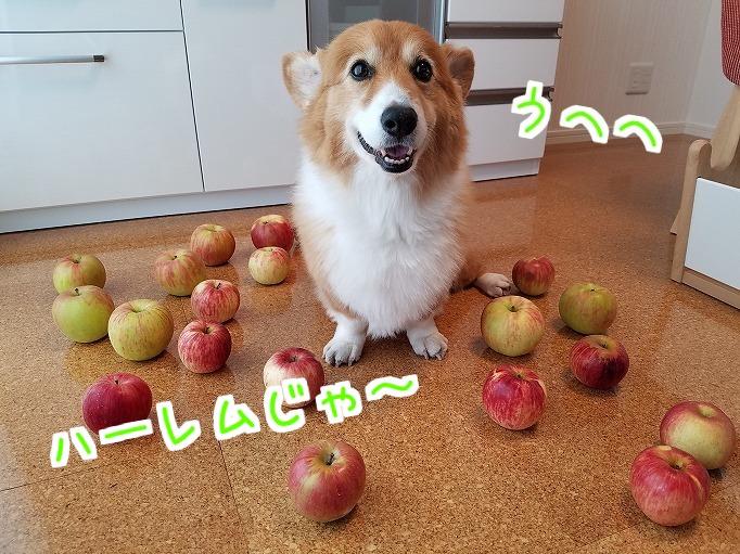 りんごと風太06