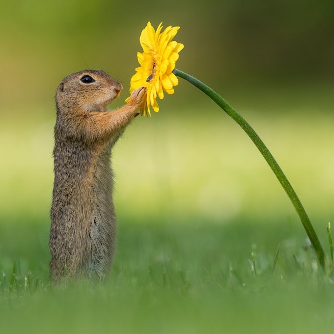La fotografía de la ardilla que huele flores viral, que conmovió a muchas personas en el mundo
