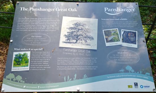 Information board bout the Panshanger Oak Image by Hertfordshire Walker released under Creative Commons BY-NC-SA 4.0