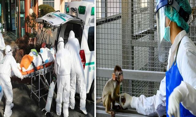 الصين فيروس القردة  - China simian virus B