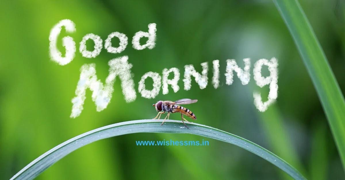 good morning msg in gujarati language, suprabhat gujarati, morning thoughts gujarati, good night message gujarati, good morning in gujarati language, morning message in gujarati, gujarati morning quotes, good morning gujarati shayri