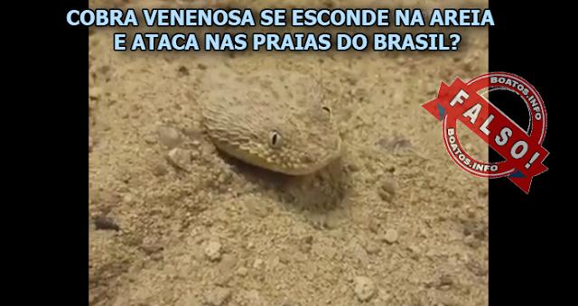 Nova especie de cobra aparece nas praias de São Francisco e Itaparica - Boato Falso