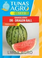 cara menanam semangka tanpa biji, semangka non biji, benih lentera f1, jual benih semangka, toko pertanian, toko online, lmga agro