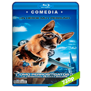Como perros y gatos 2: La venganza de Kitty Galore (2010) BRRip 720p Audio Dual Latino-Ingles
