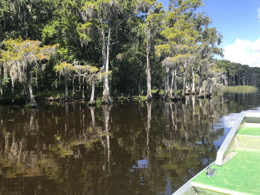 The coastal low lands of Florida