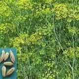 http://rajaramuan.blogspot.com/2014/06/kandungan-kimia-dan-efek-farmakologis.html Selesai