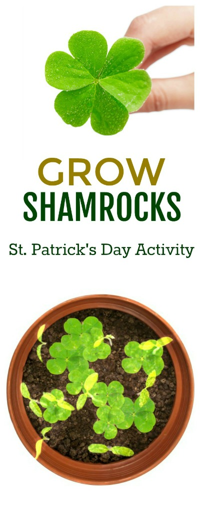 GROW LUCKY SHAMROCKS- a fun kids activity for St. Patrick's Day! #shamrocks #kidsactivities #stpatricksdayactivities