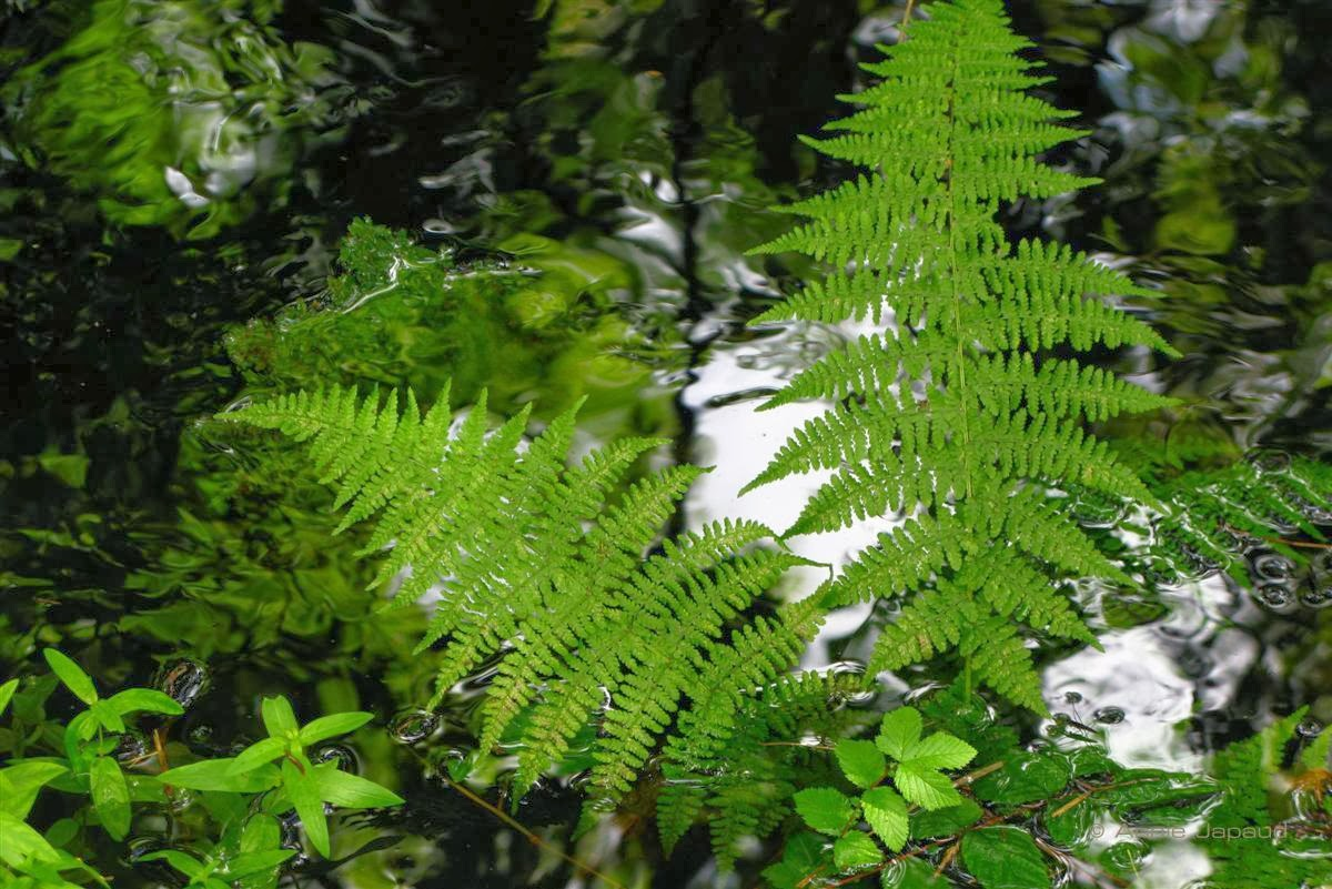 ferns in water