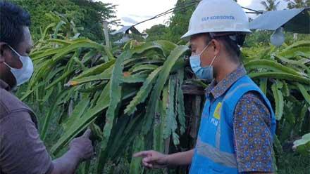 program Electrifying Agriculture atau listrik untuk pertanian dari PLN