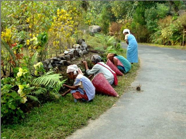 Desa Terbersih di Dunia Ada di Indonesia