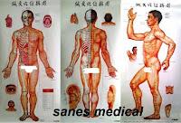http://labklinik.blogspot.com/2013/06/jual-Poster-Laki-laki-Titik-Titik-Akupuntur-Seluruh-Badan-3-pose-Depan-Samping-Belakang-beli-harga-murah.html