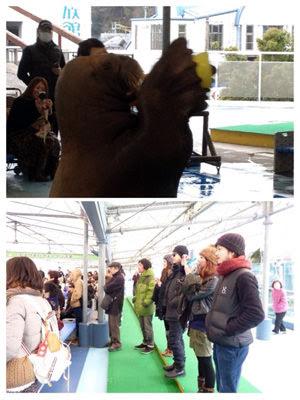 慰安旅行in三重~セイウチショーとアシカショー~