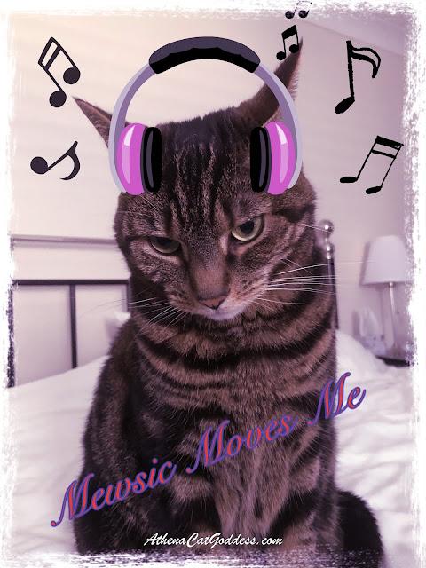 cat with headphones graphic