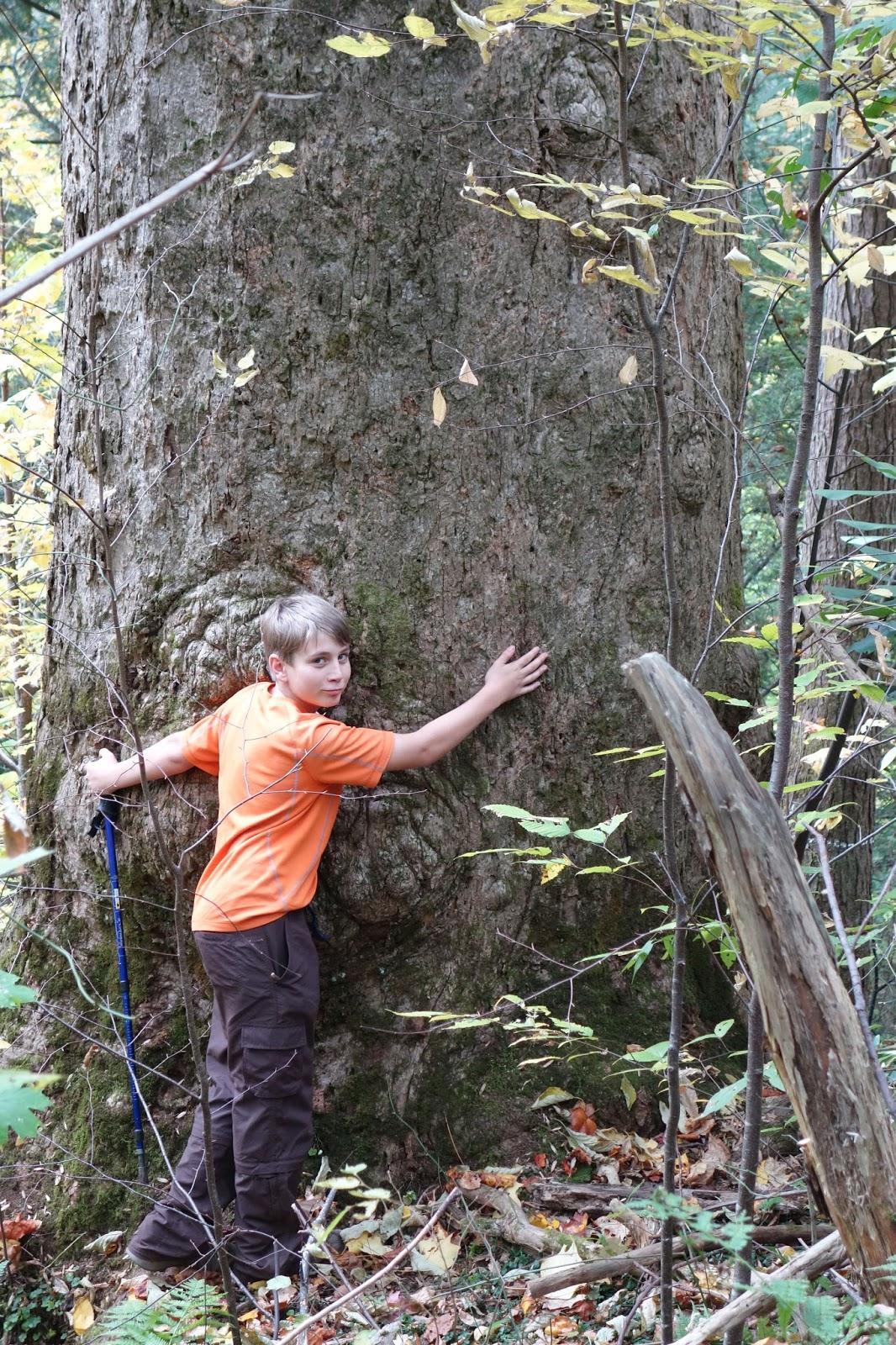 Aidan with tree