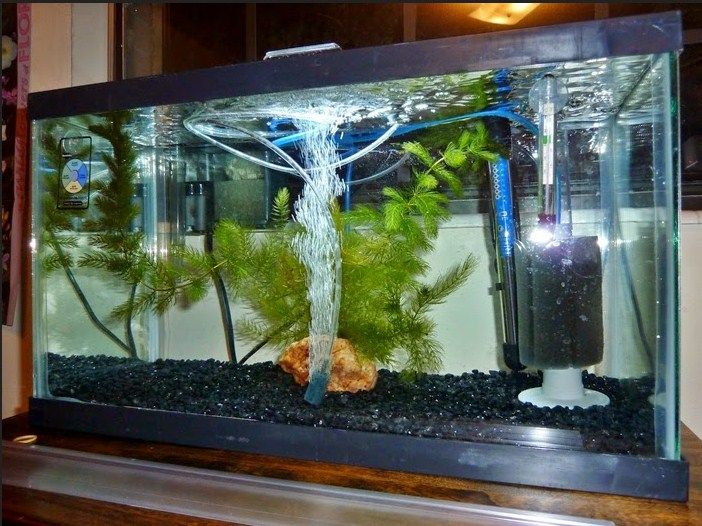 Jenis Dan Harga Aquarium Yang Populer Dijual Sekarang Ini
