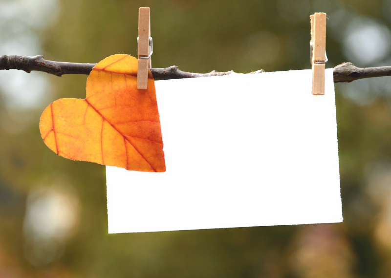 A leaf with a blank piece of paper in a post about setting my monthly goals for September 2020