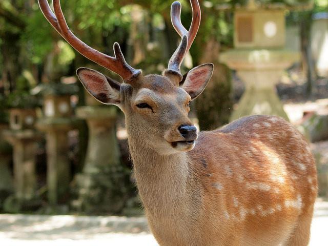 Rusa di Jepang Ditemukan Mati dengan Empat Kilogram Plastik Dalam Perutnya