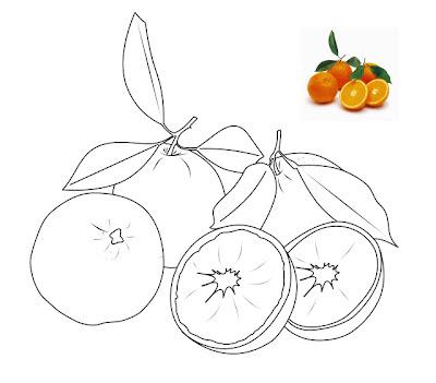 Gambar-gambar buah-buahan untuk diwarnai Anak anak Lucu