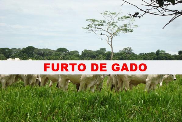 Em Mato Rico 25 cabeças de gado foram furtadas