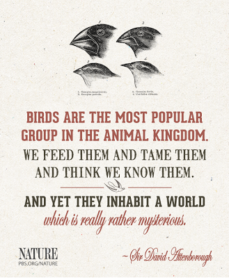 David Attenborough bird quote