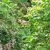Μια νεαρή αρκούδα...  βολτάρει στο Μικρό Πάπιγκο!